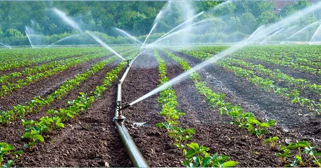 Lo extraordinario de nuestra agricultura: El agua